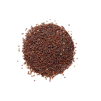 New Crop Of Mustard Seed or Mustard Seed