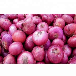 Wholesale Fresh Onion For Sale / Fresh Onion Export To Dubai / Export Fresh Onion