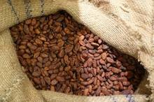 Quality natural roasted cocoa beans