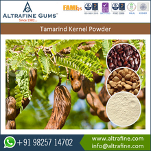 Perfect Quality Easy to Consume Tamarind Kernel Powder with Nutritious Properties