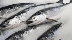Frozen Mackerel , Horse Mackerel , Bonito ,Tuna , Salmon Poland Frozen Fish Supplier
