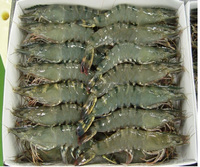 Frozen Tiger Prawns/ Frozen Tiger Lobsters .Frozen Shrimps