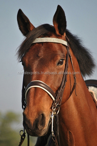 wholesale colorful cow leather padded quality buckle horse bridle with superior quality reins