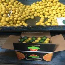 2017 Fresh citrus fruit lemon FRESH LEMON ( Adalia - Verna - green lime ) for export