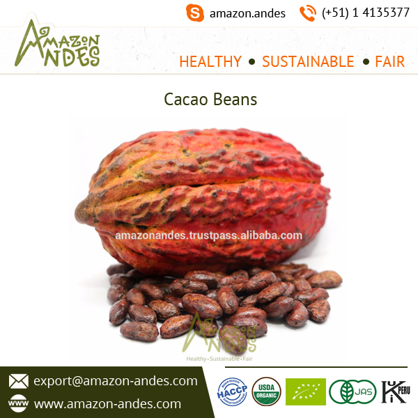 Organic Certified Fine Cacao Beans for Export