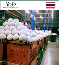 Diamond shape young Thai Coconut