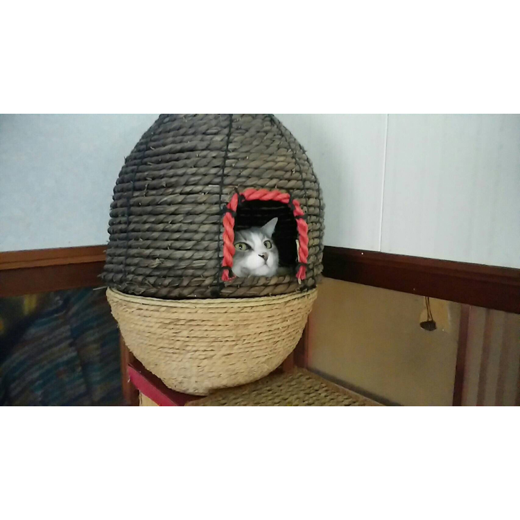 High quality Japan pet supplies cat for export