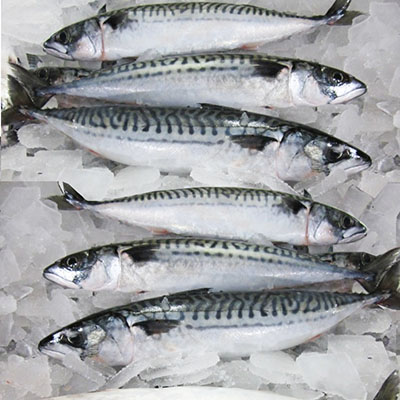 Frozen Hake Fish/Frozen Red Seabream Fish/Frozen King Salmon Fish