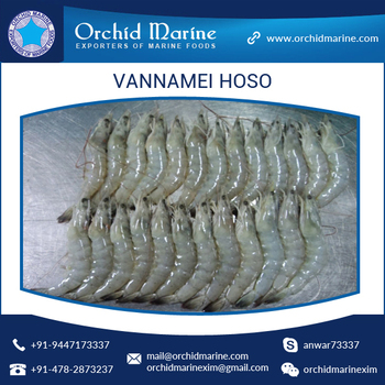 Wholesale Best Supplier of Frozen Vannamei HOSO Shrimps