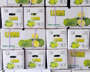 Fresh Lemon/seedless Lime best price 2018