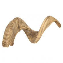 Ram Horn / Finished Ram Horn / Raw Ram Horn Stocked