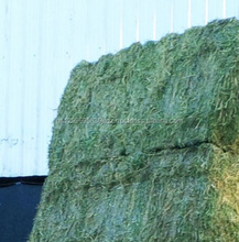 Alfalfa Hay,Quality Alfalfa Hay For Animal Feeding for sale