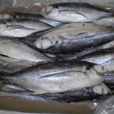sea fish best seafood with fresh frozen mackerel