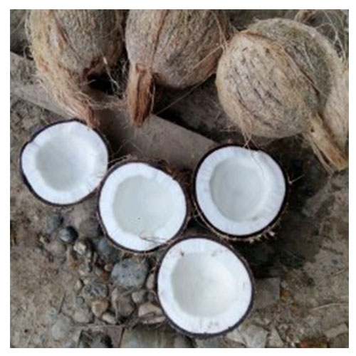 Semi Husked Mature Coconut Malaysia High Quality Fresh