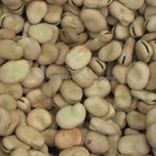 Dried & Frozen Broad Beans,Dried broad beans bulk dry fava beans for sale