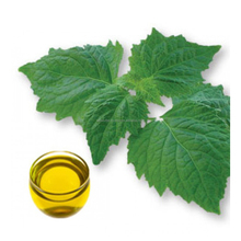 Patchouli Oil Pogostemon Cablin