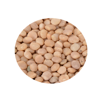 Bulk Guar Gum Seed In Best Wholesale Price