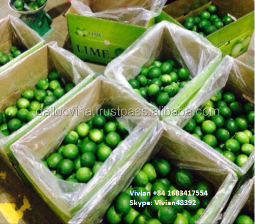 FRESH LIME AND LEMON FRUITS ///BEST QUALITY/// BEST PRICE