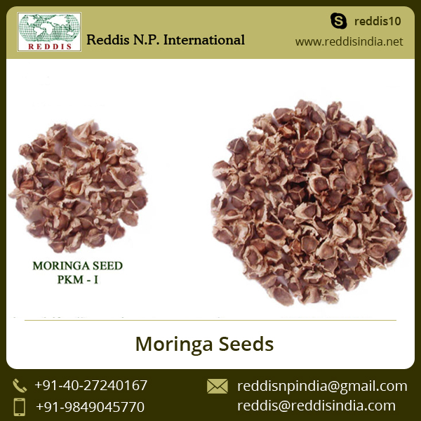 Hot Selling Favorable Price Best Quality Moringa Seeds for Sale