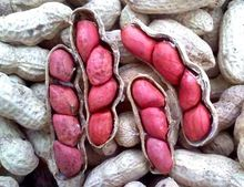 Jumbo Roasted Peanuts (In Shell) / Raw Blanched Peanuts