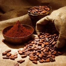 Quality Dried Grade A Cocoa/ Cacao/ Chocolate bean