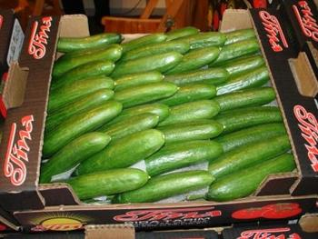 Cucumber for sale