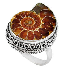 Natural Brown Ammonite Fossil value 925 silver ring Size 8