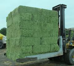 alfalfa hay for sale/TOP GRADE MIXED HAY