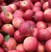A Grade Golden Delicious, Gala, Royal & Red Fuji Apples For Sale