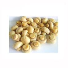 White Button Mushroom Canned best price