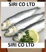 High Quality Canned Mackerel in Brine