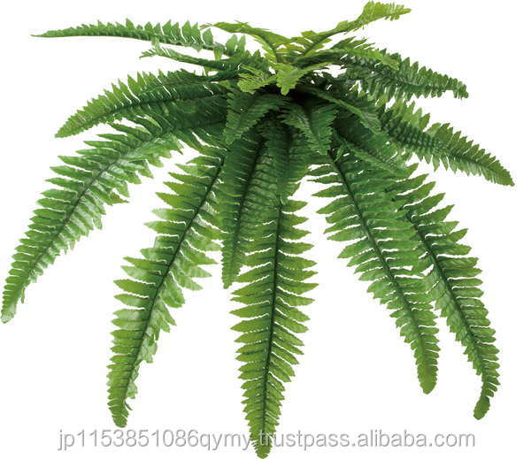 Popular and Best-selling solar panel manufacturers in china Boston fern Lock plants at reasonable prices