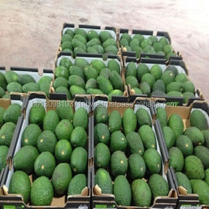 Hass/Fuerte Fresh Avocado for Sale