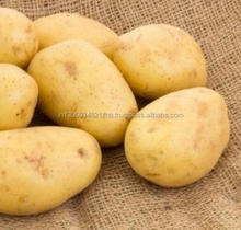 Indian Fresh Potato