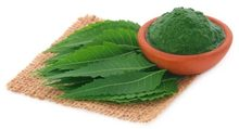 Neem leaves Powder 100 % Pure and Natural
