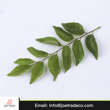 wholesale egyptian best grade fresh curry leaves
