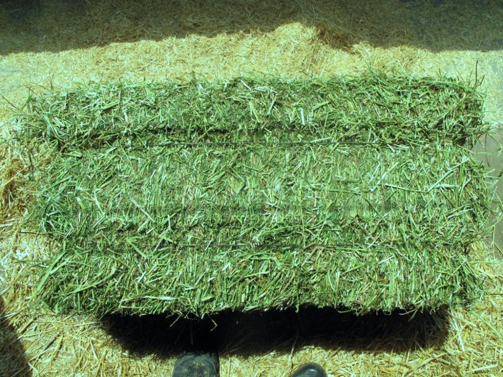 Excellent Quality Alfalfa Hay Animal Feed at Good Price