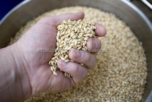 Malt Extract/Malt Extract Powder/Price of Barley Malt