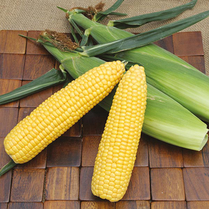 Yellow Sweet Corn / Non GMO Yellow Corn