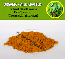 WHOLESALE Giant Curcuma False Turmeric Temulawak Curcuma Zanthorrhiza Organic Wild Crafted Fresh Natural Herbs