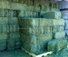 Organic Alfalfa Hay/Alfalfa Grass Hay/Alfalfa Hay Pellets For Animal Feed