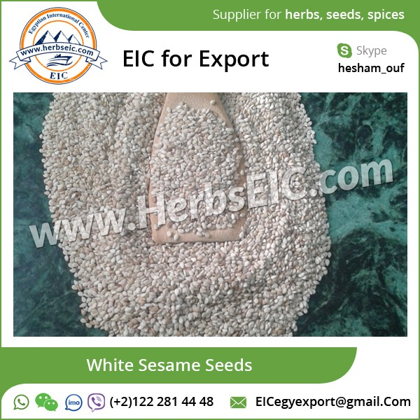 Sesame Seed White Available at Bulk Market Price