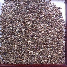 Premium arabica coffee beans for coffee and cocoa buyer (+84965556215)