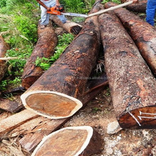 European SPRUCE Round Logs top quality and grades