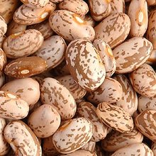 bulk pinto beans for sale at very cheap price