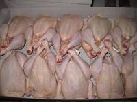 TOP GRADE A HALAL WHOLE FROZEN CHICKEN FOR SALE