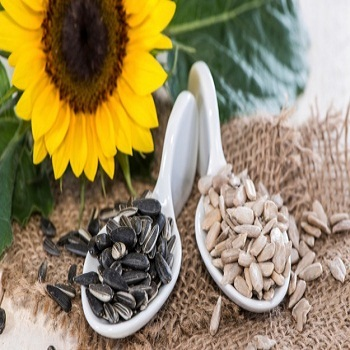 White Sunflower seeds from Bulgaria
