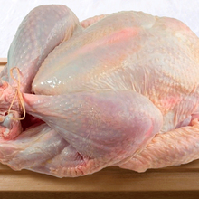 Grade A Frozen Whole Turkey From Brazil ***Top supplier