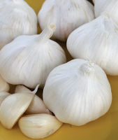 Natural Fresh White Garlic For Sale