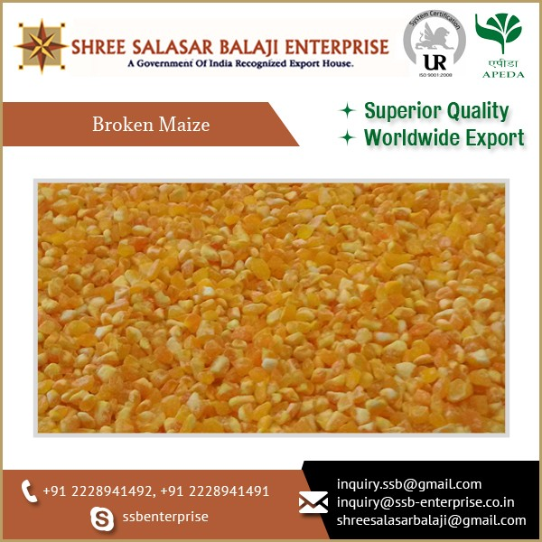 INDIAN YELLOW MAIZE FROM BEST SELLER READY TO EXPORT AT A AFFORDABLE PRICE